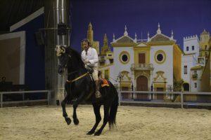 espectaculo-caballos